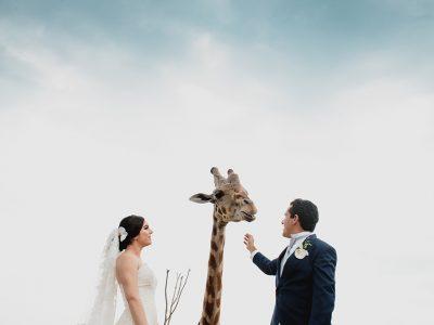 Boda en Africam Safari | Marigel & Oscar